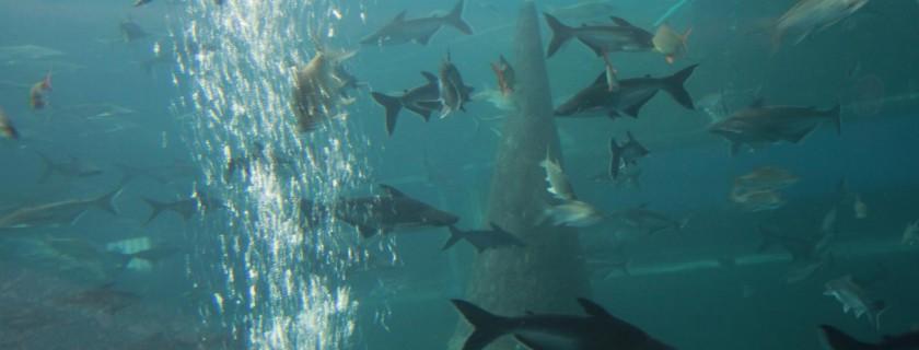 พันธุ์ปลาในลุ่มน้ำโขง