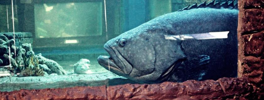 วันนี้ขอเสนอปลาหมอทะเล